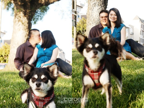san francisco engagement photographer, san francisco pet photographer, palace of fine arts engagement session